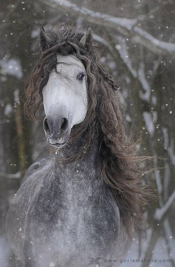 horse with wild mane in the snow