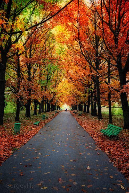Autumn Canopy, Lithuania photo via jamas   Beautiful ...