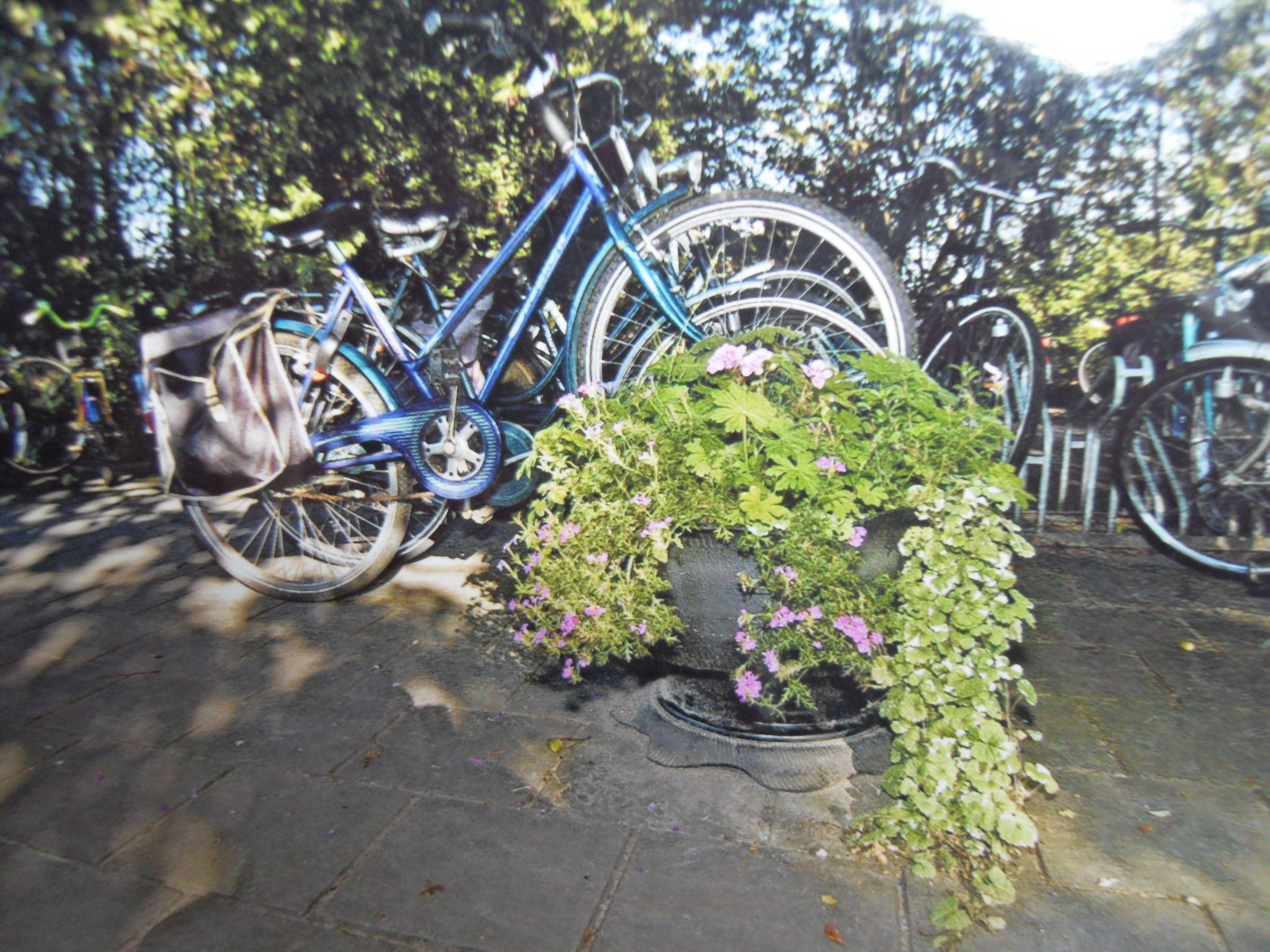 bloembak bij schoolfietsenstalling Vrije basisschool de ijssel zutphen