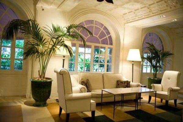 Parlor Palm trees in living room