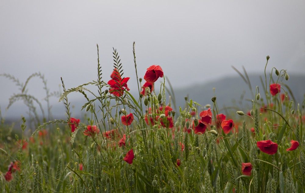 Devotional: Lest We Forget by Darren Hewer