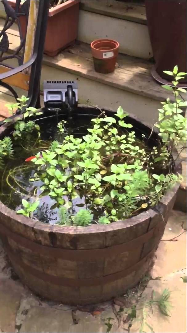 Cheap easy home made whiskey barrel fish pond pond ideas for How to build a koi pond cheap