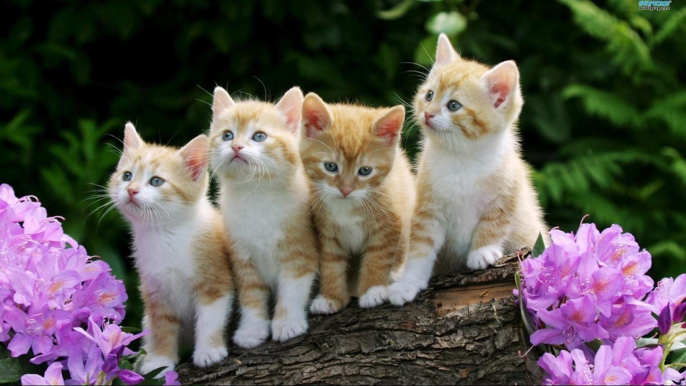 Birmingham Airport Transfers Kittens Cutest Rainbow Kittens Pets