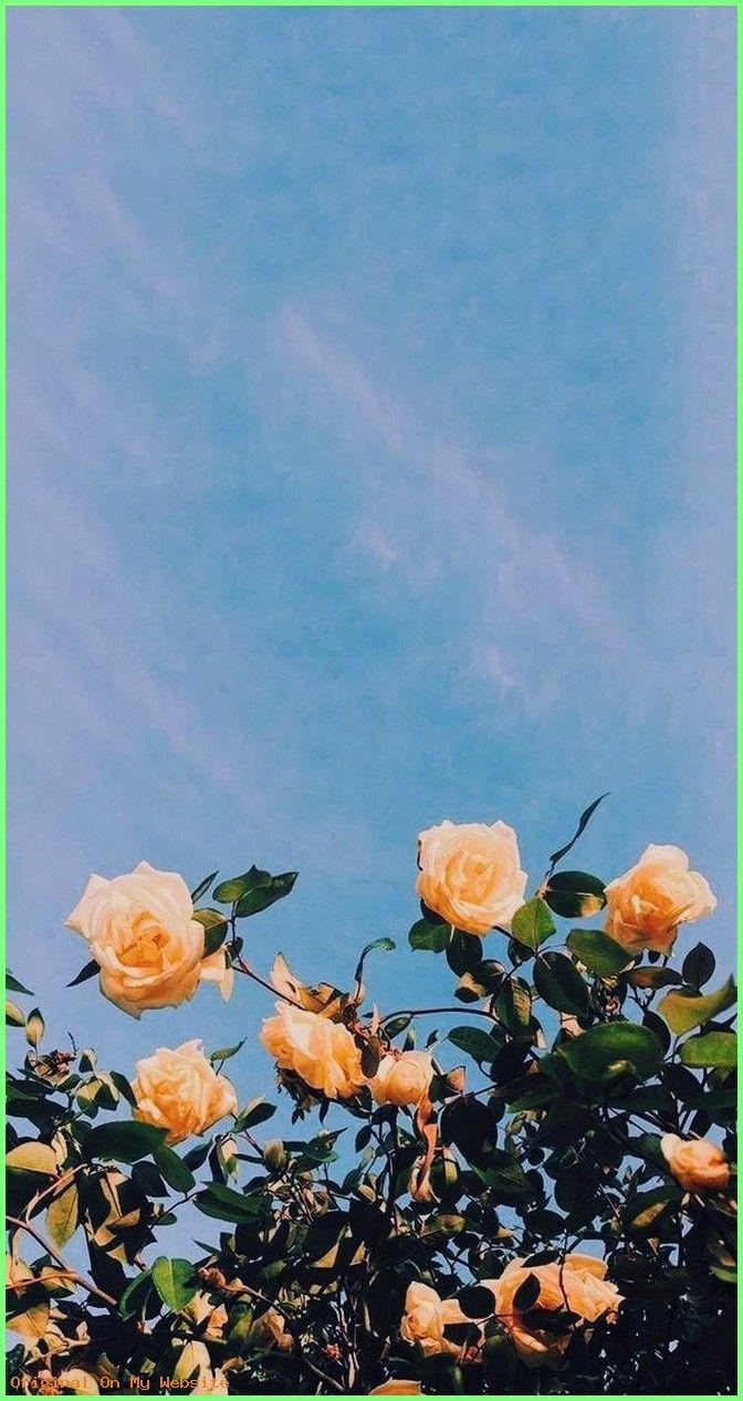 Wallpaper Backgrounds Aesthetic 30 Marvelous Flower Wallpaper