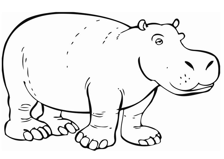 Ausmalbilder Nilpferd 01 рисунки животных рисунки и животные