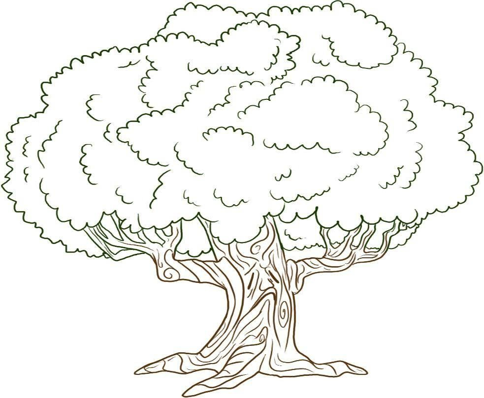Free Printable Tree Coloring Pages For Kids  Oak tree drawings