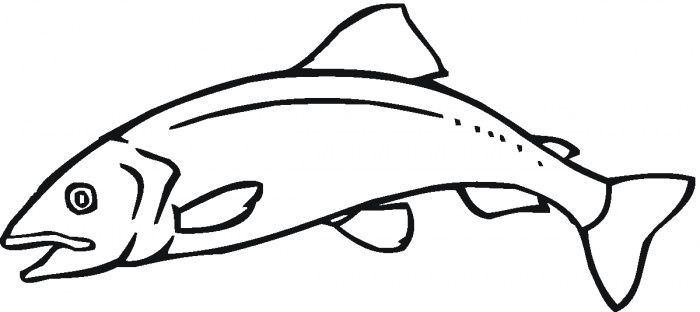 Gallery For > Salmon Drawing Outline
