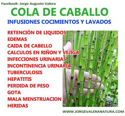 Cola De Caballo Hierbas Curativas Plantas Medicinales Hiervas Medicinales
