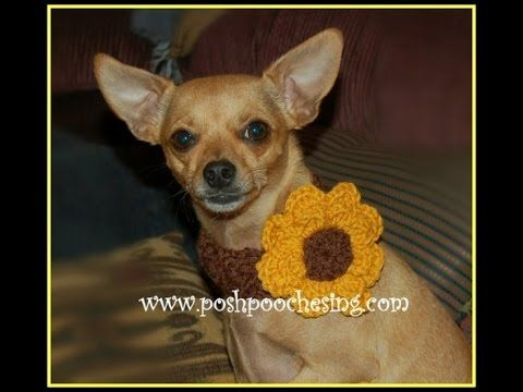 Posh Pooch Designs Dog Clothes: Shell Stitch Dog Collar with a Big Flower or Butterfly