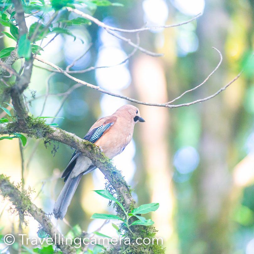 Birding opportunities around Binsar Wildlife Sanctuary, Uttrakhand, India