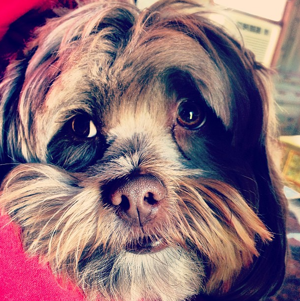 Chu E pondering his dating life. #struggles #puppy #dog #cute #animal #love