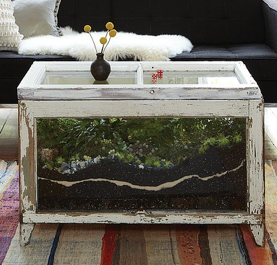 DIY Terrarium Coffee Table Close Up - DIY Terrarium Coffee Table Close Up For The Home Pinterest