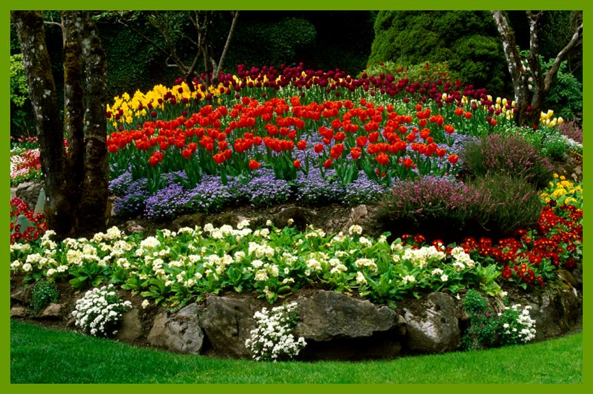 garden borders impressive free landscape design