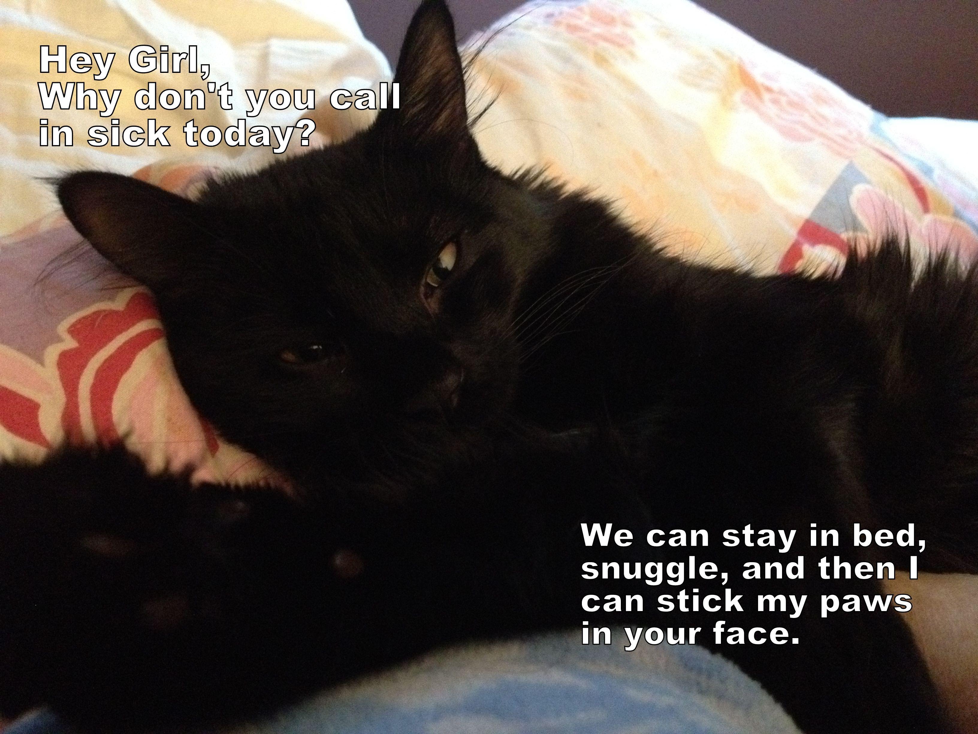 My Kitty Julius Ryan Gosling Impersonation Cat Love Black Cat Funny