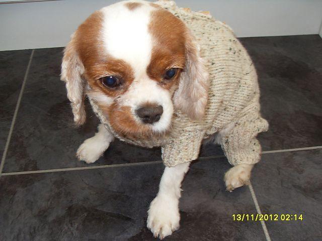 Ravelry Four Legged Dog Coat Free Pattern By Maggie Mair Crochet