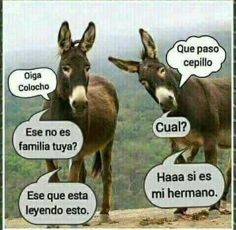 Feo Buenas Noches And The Fin Bye Jajaja Bye For To Comment On For Fin Tu Frases Divertidas Frases Positivas Divertidas Chistes Geniales