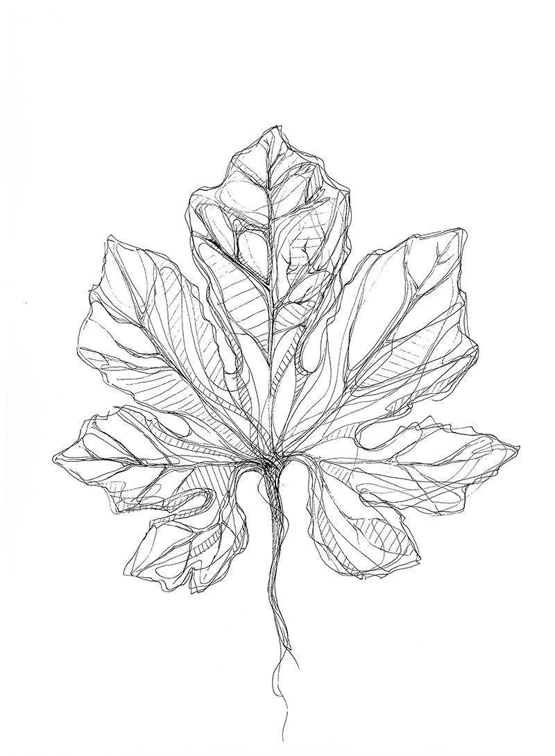 Botanical art coloring book -  5 Botanical Art 5