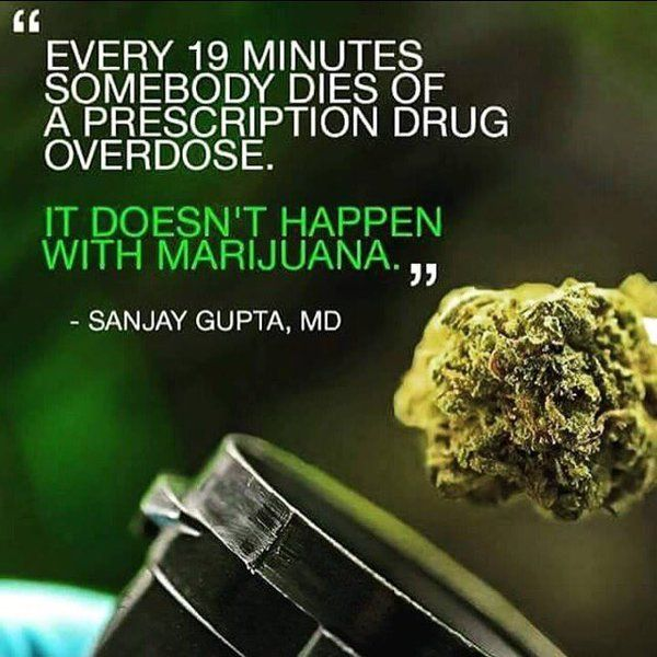 drugs leaves quotes marijuana - photo #45