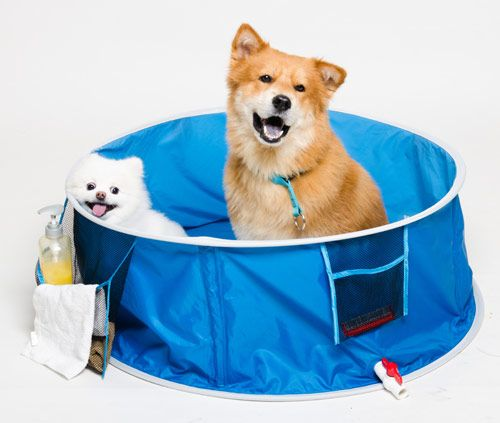 This ingenious dog bath pops up in a flash and packs down