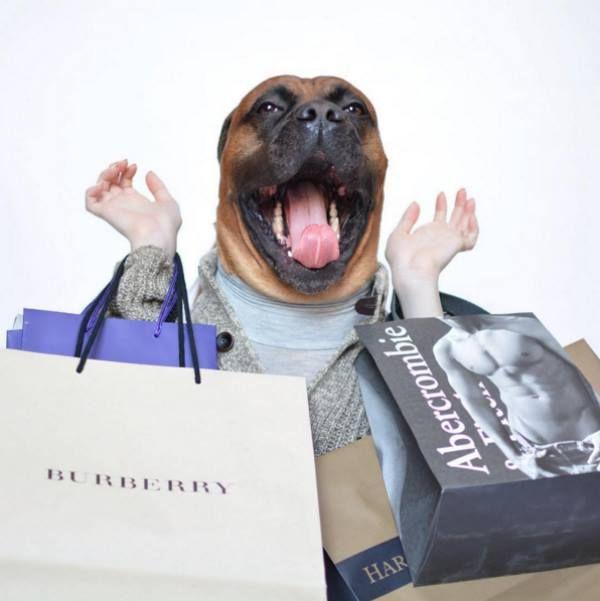 tendencia moda canina