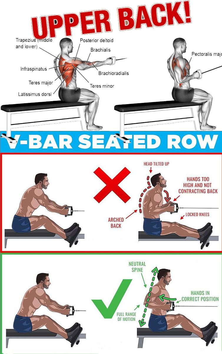 V Bar Seated Cable Row Back Exercises Fitness Training Workout Plan Gym
