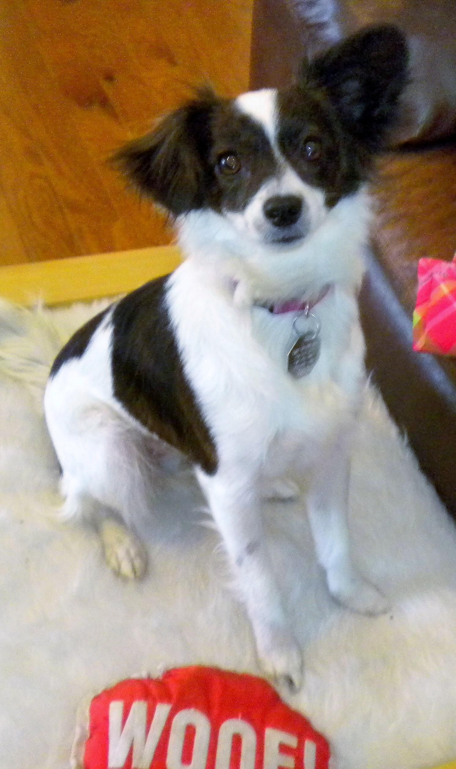 Adopt Blitzie 602 On Pet Adoption Puppy Love Adoption