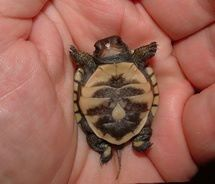Like Jesus Daily® on Facebook http://www.facebook.com/JesusDaily    REPIN!! Jesus loves baby turtles!