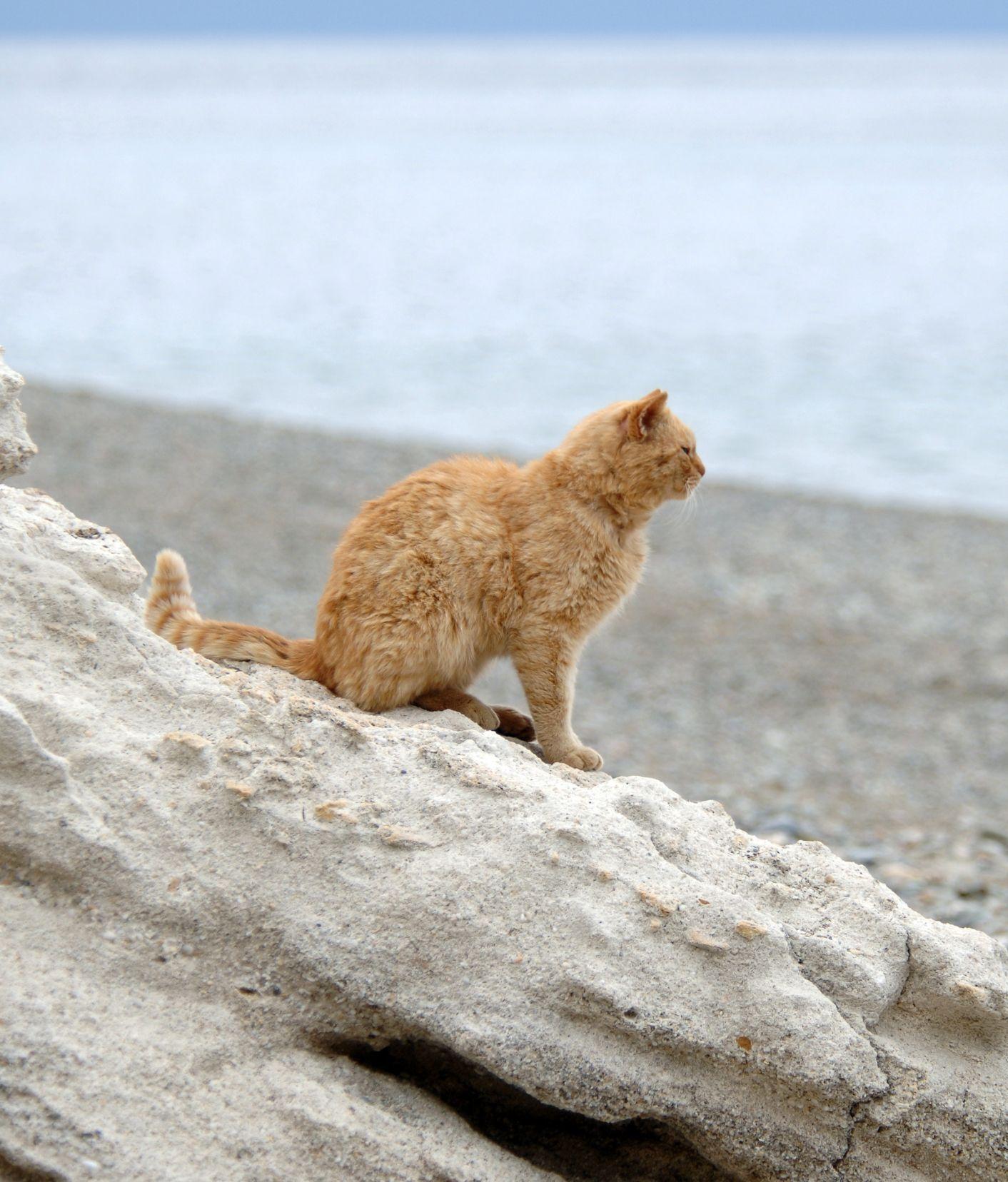 Cat At Beach Cats Beach Pet Care