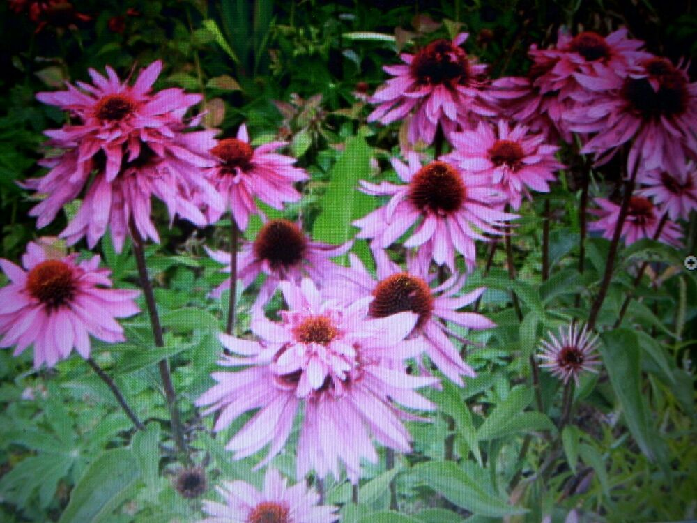Blumen Samen Winterharte Stauden Aus Eigenem Bio Garten Set 13 5