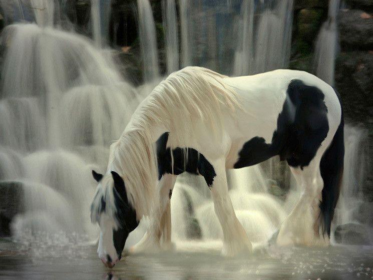 pferdebilder kostenlos