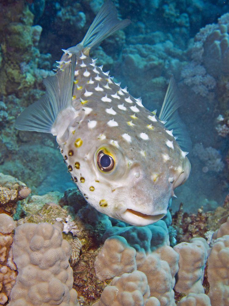 съедобные морские рыбы картинки пока, владельцы усатых