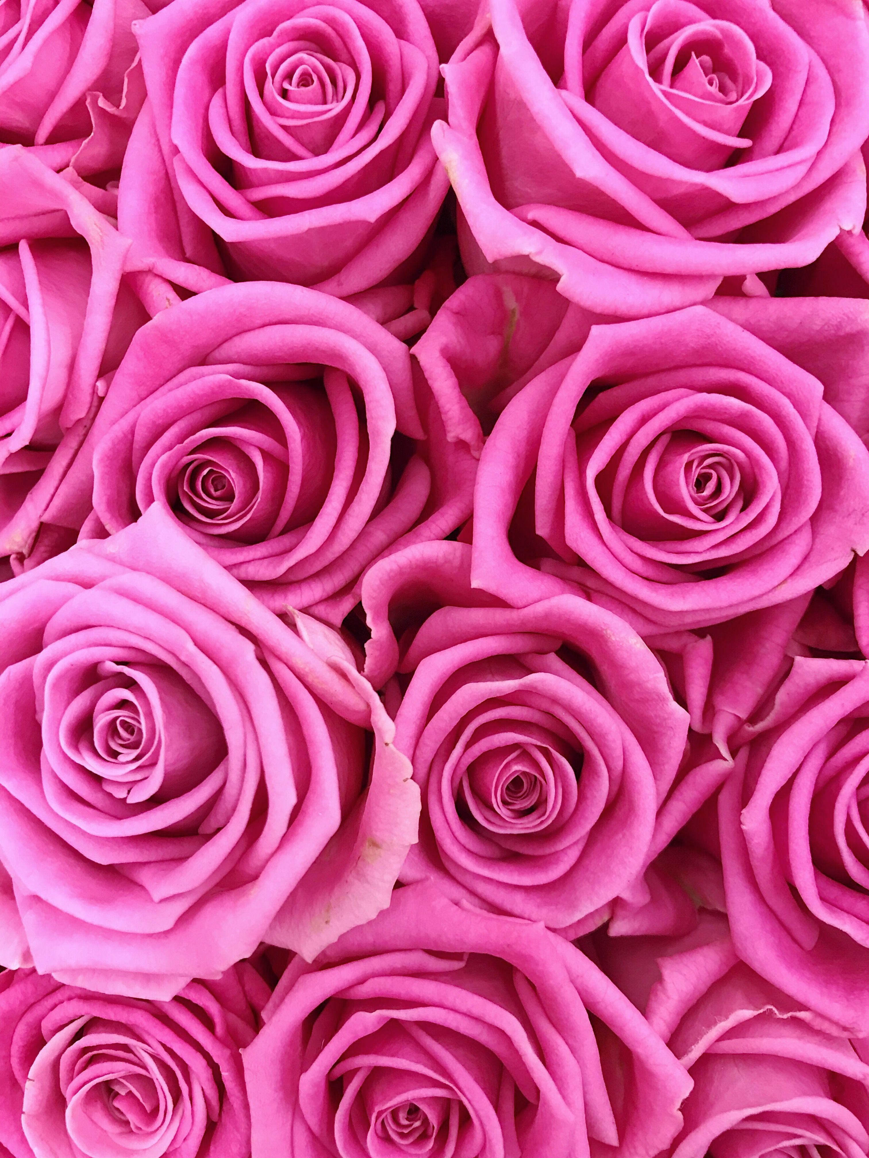Roses screensaver demidolya t screensaver - Rose screensaver ...