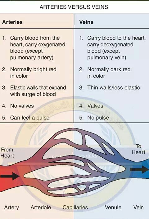 Veins Vs Arteries Knowledge Pinterest Phlebotomy Medical And
