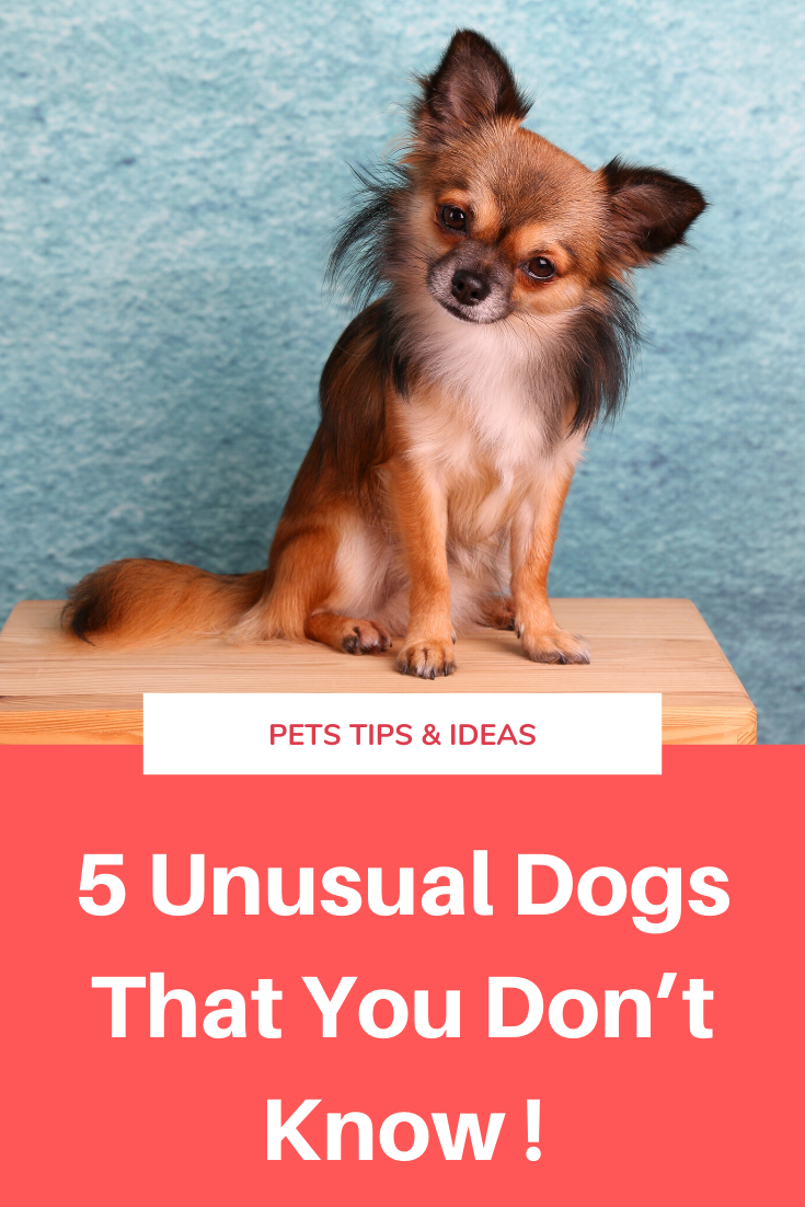 These 5 Dogs Are Unusual That Maybe You Don T Know This Tip May Help You Dogs Pets Ideas In 2020 Cute Dogs Breeds Super Cute Animals Cute Little Animals