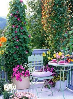 Photo of Balcony garden – N0 falta nada en este balc0n: l0s m0rning gl0ry trepand0 y fl0r…