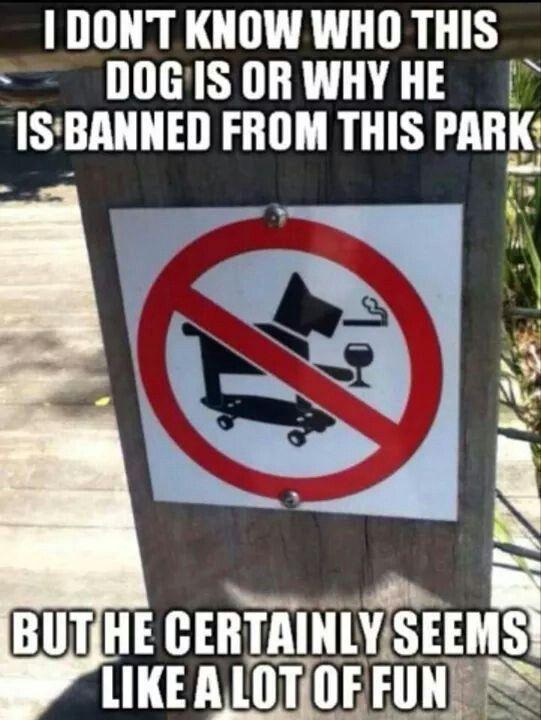 I want THAT dog!!
