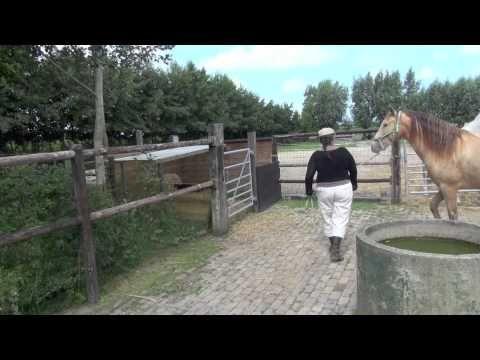 Teaching Spanish Walk In A Few Steps Spaanse Pas Leren In Een Paar St Spaans Paarden Leer