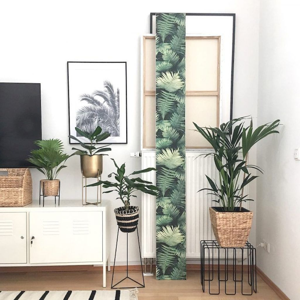 Inspiration Types Of Home Ornamental Plants That Can Cool