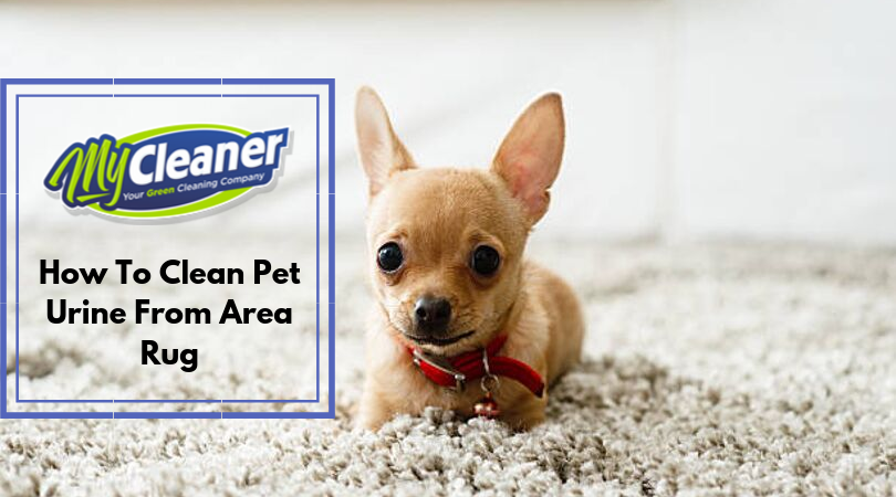 When you have a furry friend at home, occasional accidents may happen. These small mistakes can be a bit tricky to clean up when they happen on an area rug or carpets. But immediate actions and deep cleansing can revive your carpet to its original condition quickly. Moreover, some behavioral preventative measures can help to prevent future mishaps. But do you know how to clean pet urine from area rug?  #rugcleaning #rugcleaners #rugcleaningservice #professionalrugcleaning