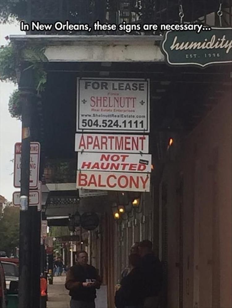 New Orleans Funny Pictures : orleans, funny, pictures, Afternoon, Random, Picture, Orleans,, Funny, Memes,, Pictures
