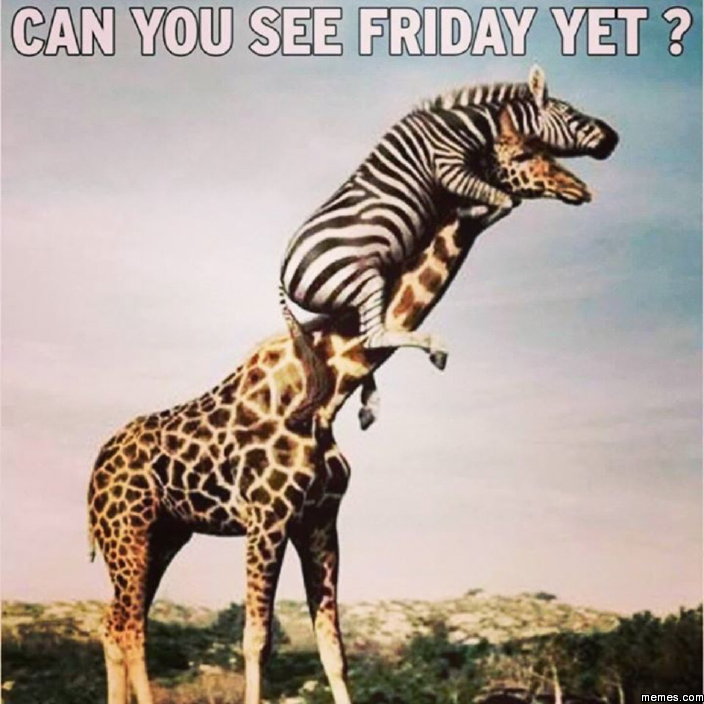 Can You See Friday Yet Funny Animals Animal Memes Funny Animal Pictures
