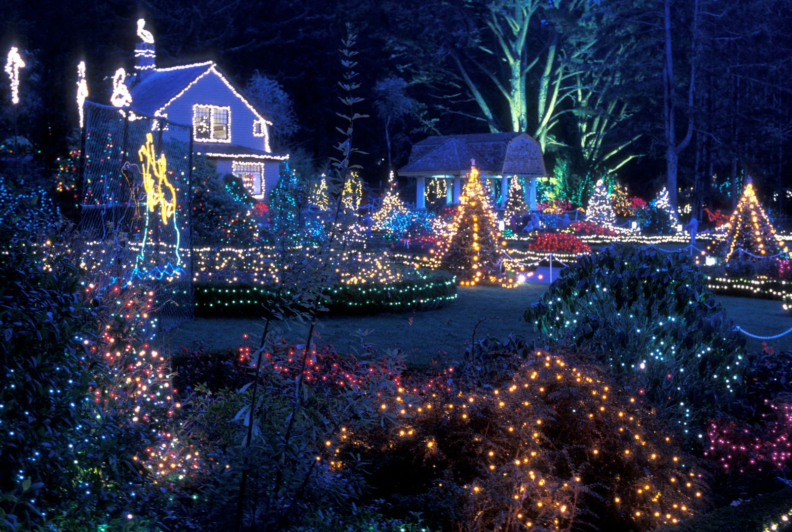 holiday lights long island ny new york nassau suffolk contest giveaway gift card Christmas hannukah Channukah & holiday lights long island ny new york nassau suffolk contest ... azcodes.com
