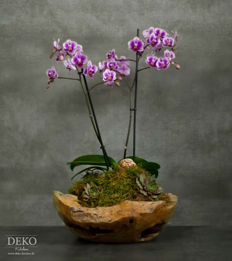 Diy orchideen effektvoll dekorieren deko kitchen plants for Garden deko