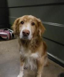 Pin On Rescues Seeking Forever Homes