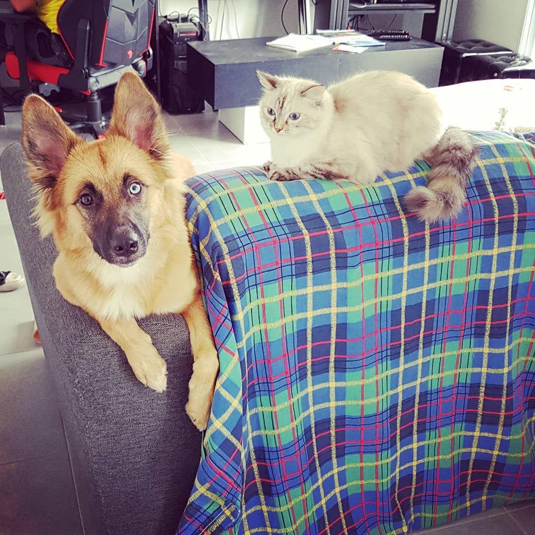 Nos amours de bêtes #chien #chat #amourdebetes #chiennedamour #chienne #tropmignonne #tropdamour