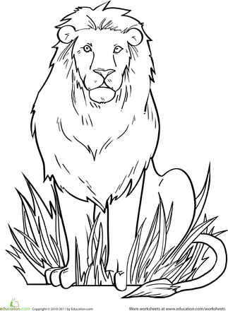 Lion Worksheet Education Com Lion Coloring Pages Animal Drawings Animal Coloring Pages