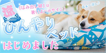 夏をひんやり乗り切るクールマット大作戦 ペット用品の通販サイト ペピイ Peppy ペット用品 犬 犬用ベッド