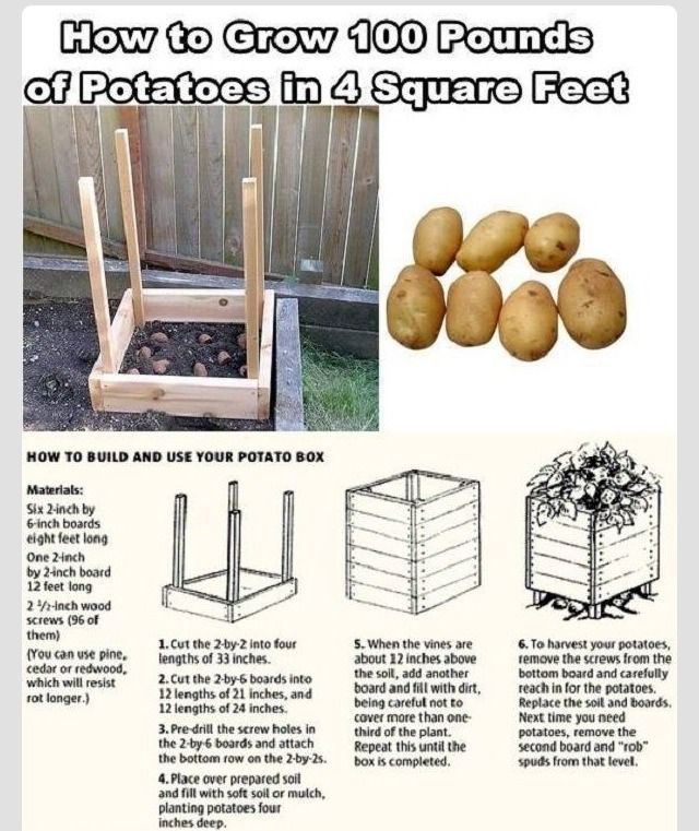 Grow 100lbs Of Potatoes In Four Cubic Feet #Home #Garden #Trusper #Tip