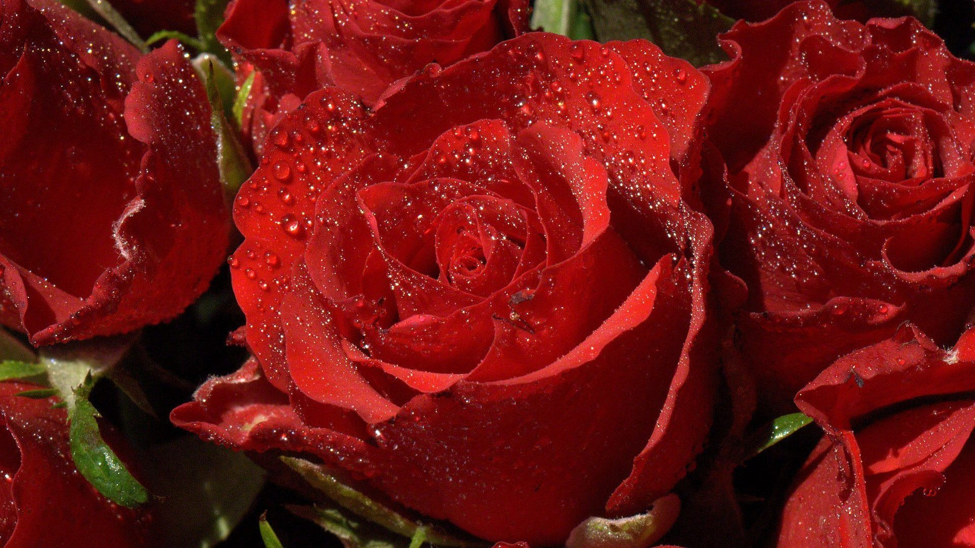 Xinature Com Red Heart Love Roses Drops Beauty Nature Beautiful Tears Flowers Rain Photography Lovely Red Flower Wallpaper Rose Flower Wallpaper Gulab Flower