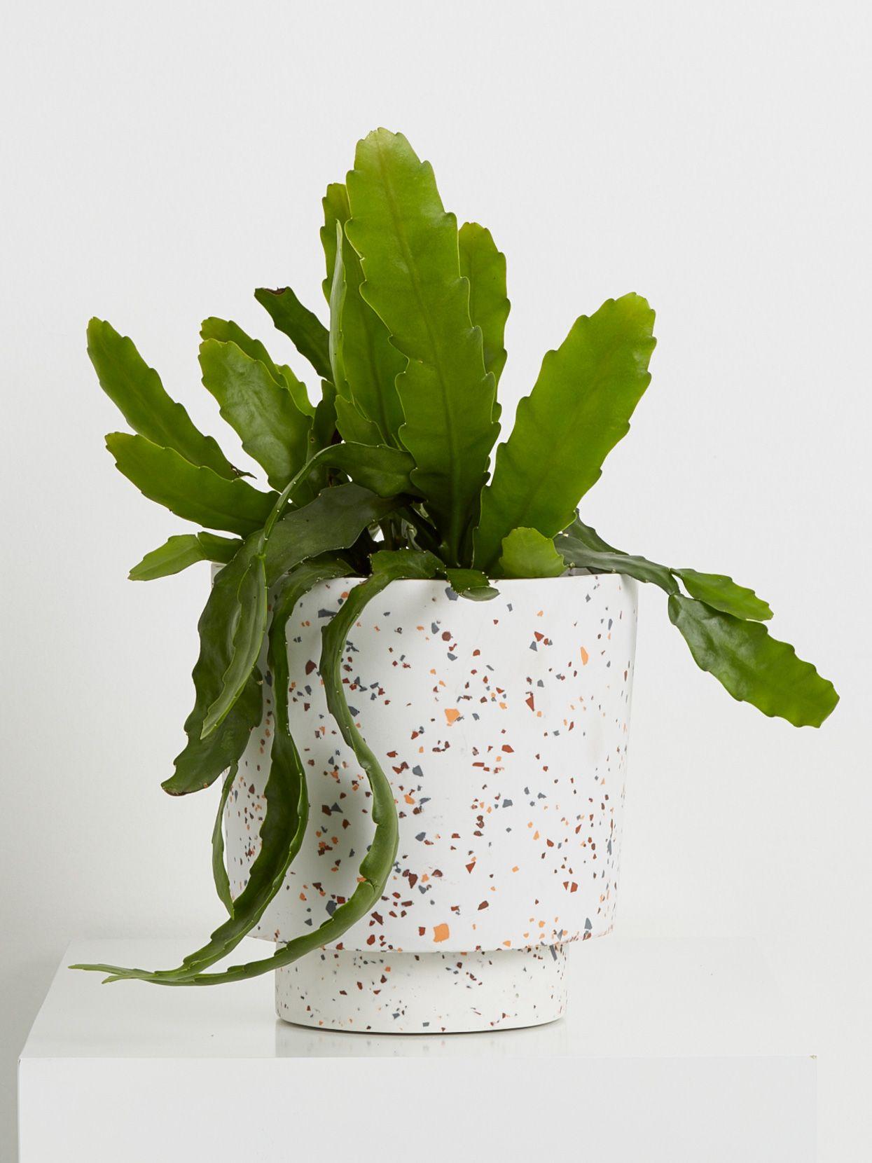 Terrazzo pot with plant